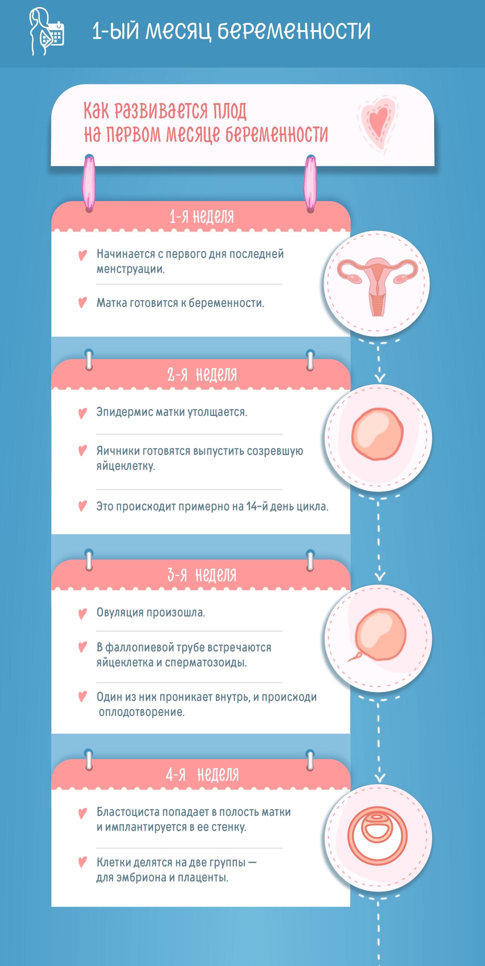 Первый месяц беременности: изменения в женском организме и развитие плода по неделям