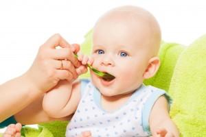 С какого возраста начинать прикорм грудничка